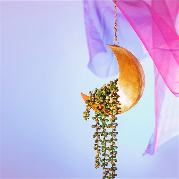 Celestial Moon Hanging Planter