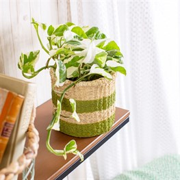 Green Stripe Cement Basket Planter