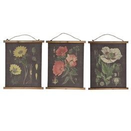 Botanical Illustrations Wall Hanging Canvas Print  (options available)