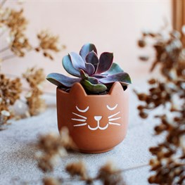 Mini Cat's Whiskers Terracotta Planter