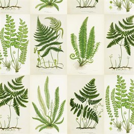 Botanical Fern Wrapping Paper  - 3 Sheets