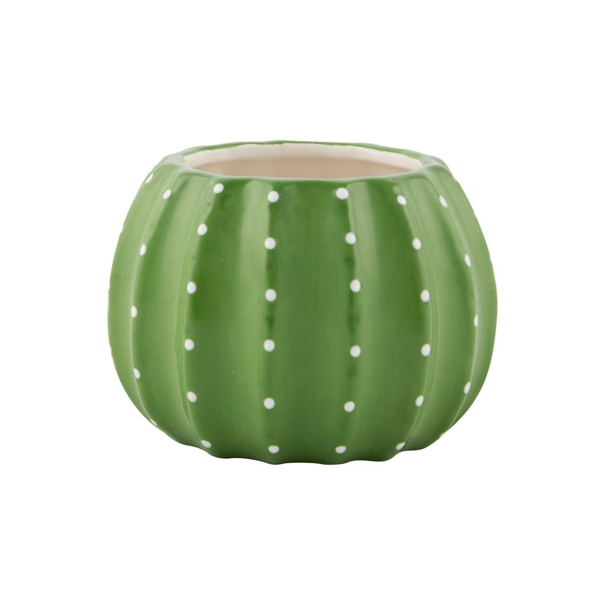 Cactus plant pot Cactus pots for sale